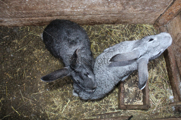 Фотография на тему Пара кроликов