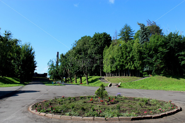 Красивый парк с зелеными деревьями и аллея