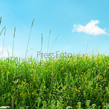 Луг и красивое голубое небо