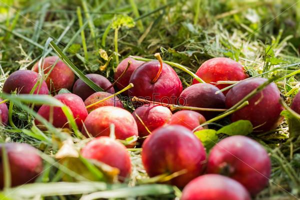 Китайские яблоки на траве