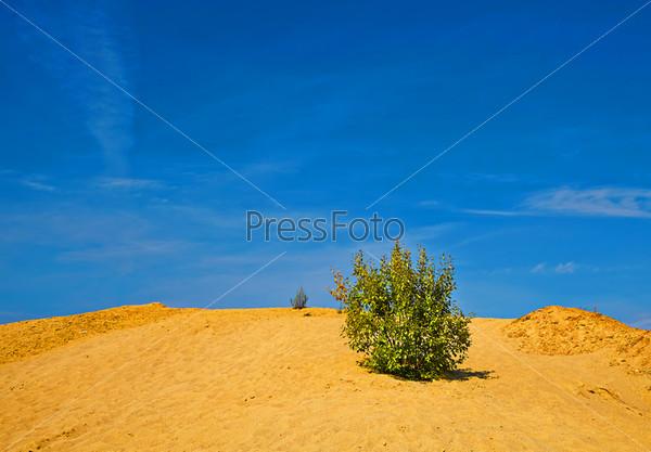Одинокий куст на песчаном холме в солнечный день