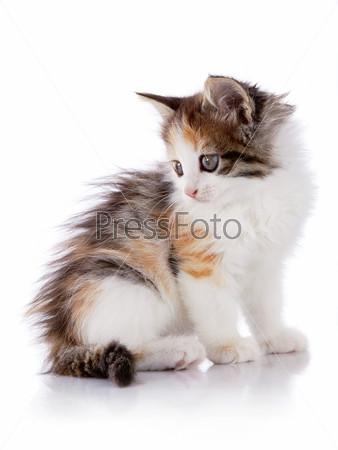 Разноцветный сидящий котенок