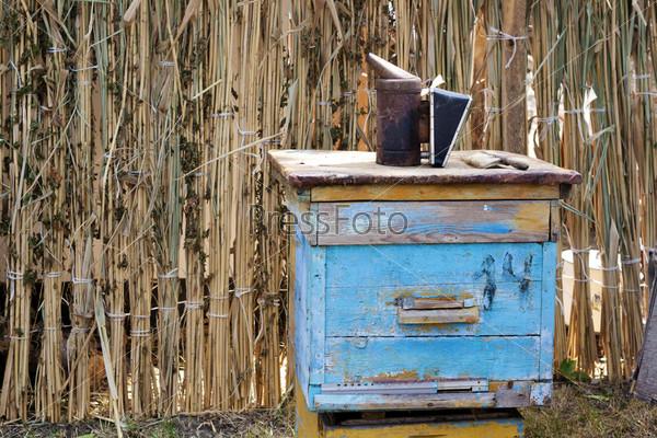 Старый синий деревянный пчелиный улей с инструментами