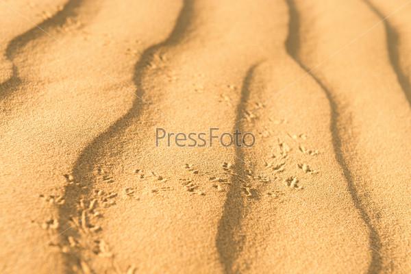 Фотография на тему Следы скарабея на песчаных дюнах в пустыне