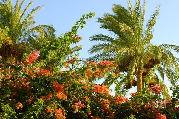 Фотография на тему Пальма