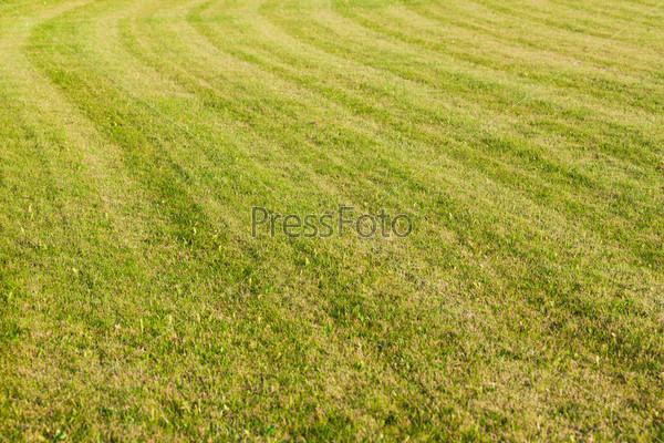 Красивая зеленая трава