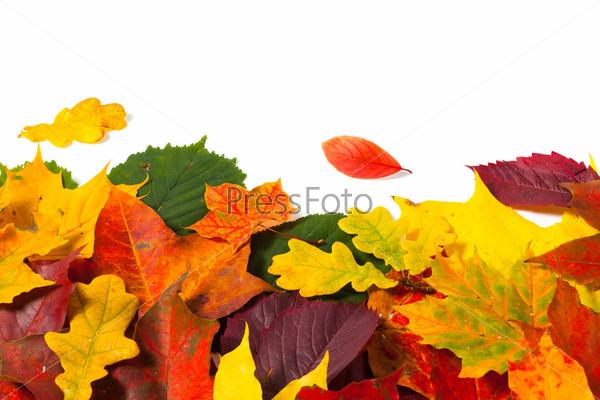 Красивые цветные осенние листья