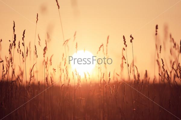 Летняя трава на закате