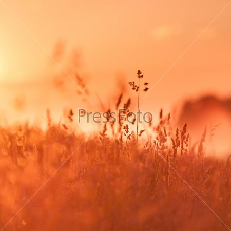 Сельские травы на лугу