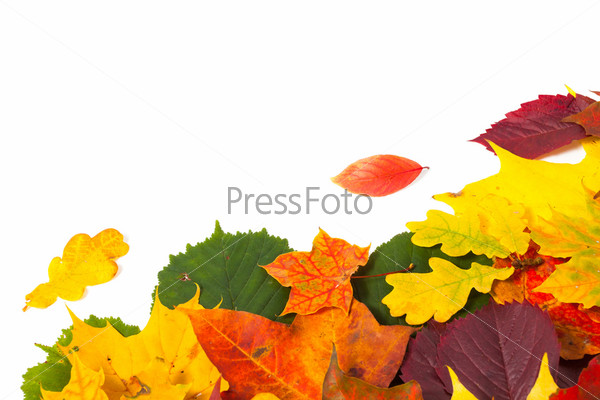 Фотография на тему Красивые красочные осенние листья