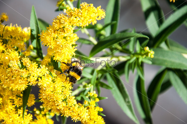 Насекомое в поисках нектара на цветке