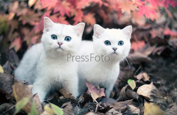 Фотография на тему Осень и котята