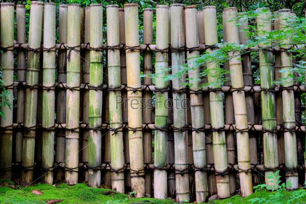 Фотография на тему Забор из бамбука