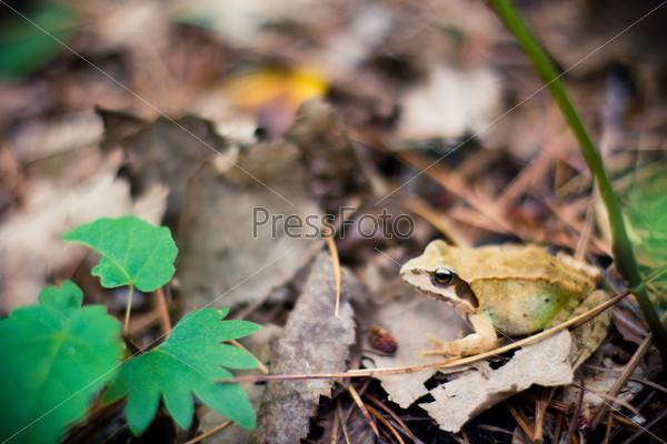 Фотография на тему Дикая лягушка