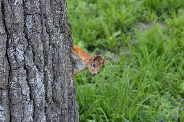 Фотография на тему Белка сидит на дереве в парке