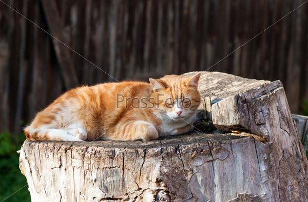 Кошка лежит на старом пне