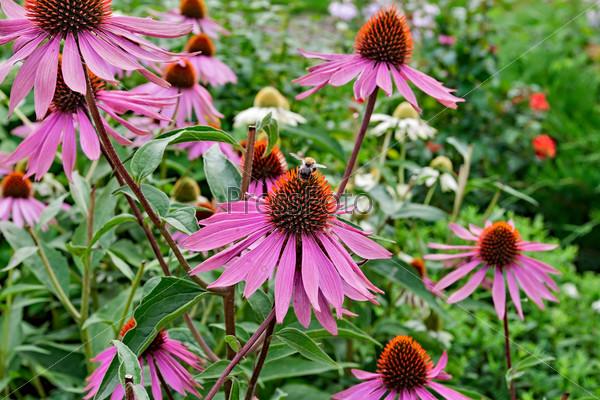 Фотография на тему Цветы