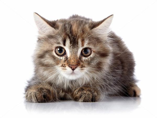 Пушистый испуганный кот на белом фоне