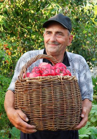 Пожилой человек собирает яблоки