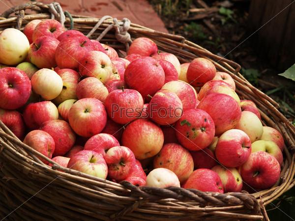 Фотография на тему Красные яблоки в корзине