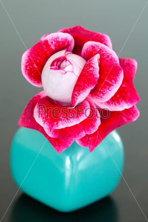 Необычная красная роза в вазе