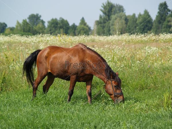 Коричневая лошадь на поле с зеленой травой и цветами
