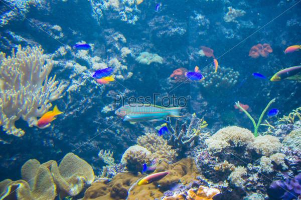 Тропические рыбы под водой