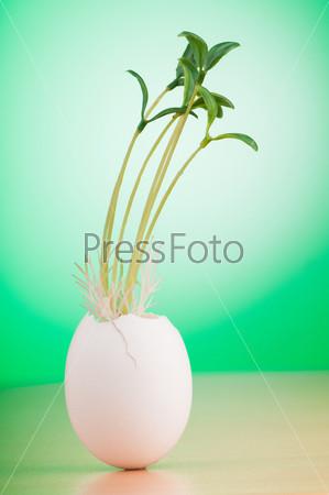 Фотография на тему Яйцо с ростком, концепция новой жизни