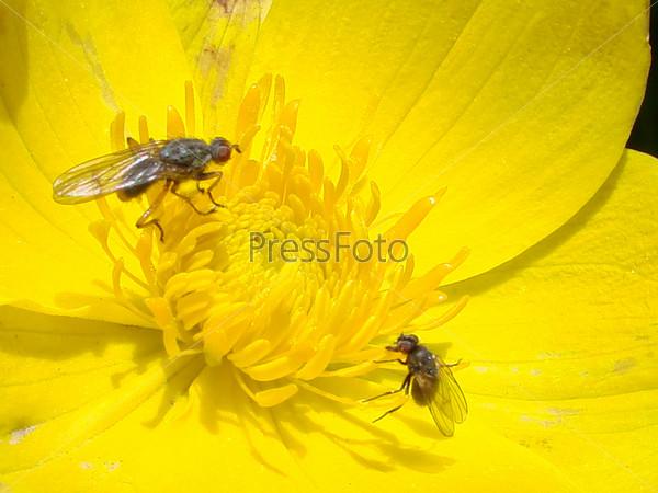 Фотография на тему Цветы на острове Уруп