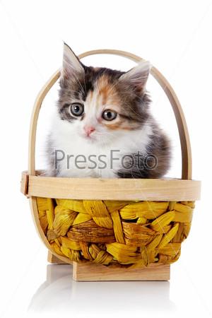 Котенок в плетеной корзине