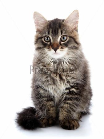 Полосатый пушистый кот
