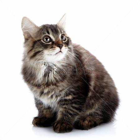 Фотография на тему Полосатый пушистый маленький кот