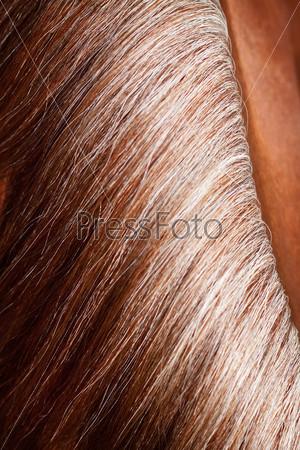 Фотография на тему Грива лошади