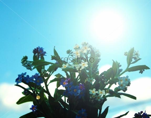 Фотография на тему Незабудки на фоне неба