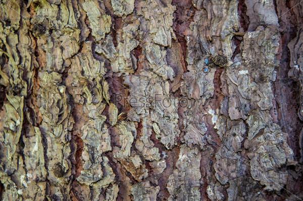 Фотография на тему Кора дерева, фон