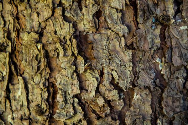 Кора дерева, фон