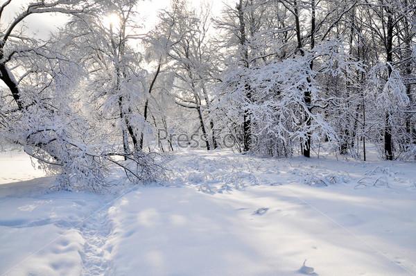 Фотография на тему Лес