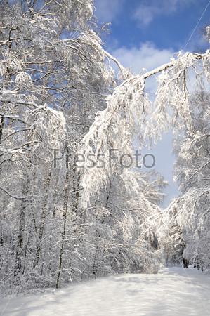 Фотография на тему Зимний лес