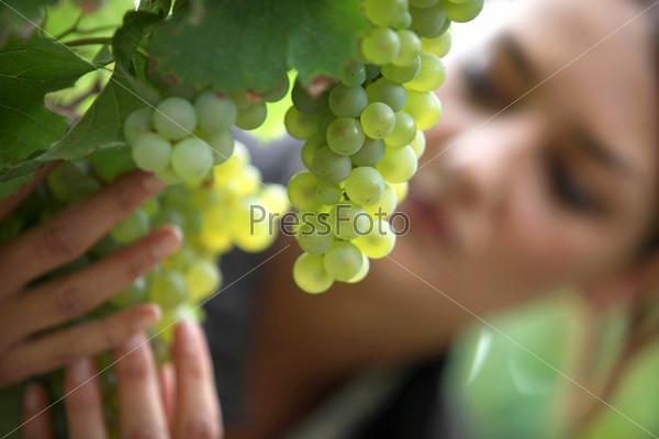 Проверка винограда в винограднике