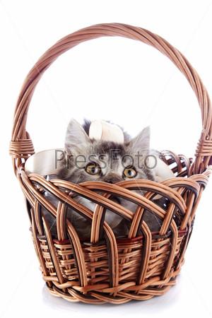 Кошка смотрит из бежевой плетеной корзины