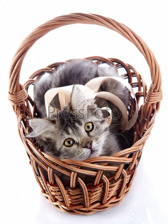 Полосатая кошка с желтыми глазами в плетеной корзине