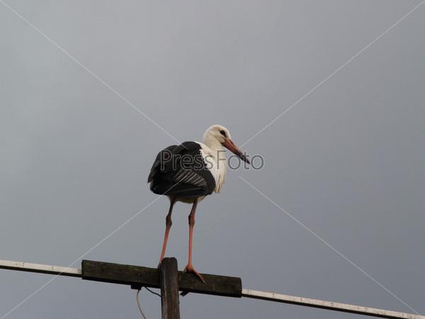 Молодой аист сидит на антенне на фоне голубого неба
