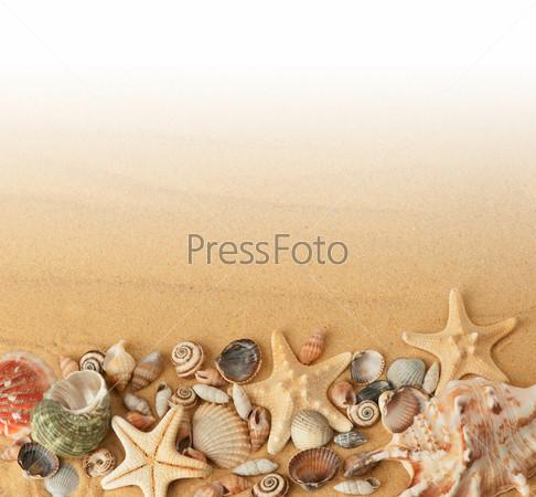 Фотография на тему Ракушки на песке