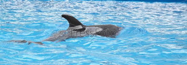 Фотография на тему Дельфин в воде