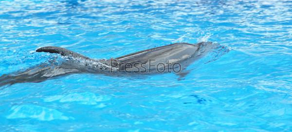 Дельфин в воде