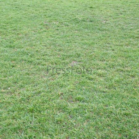 Зеленый луг или газон