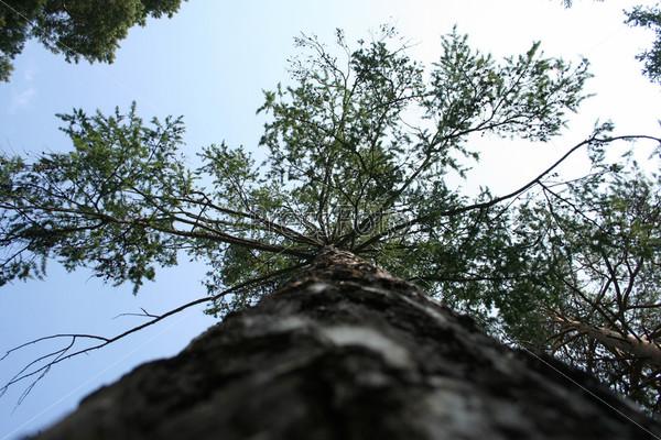 Фотография на тему Дерево