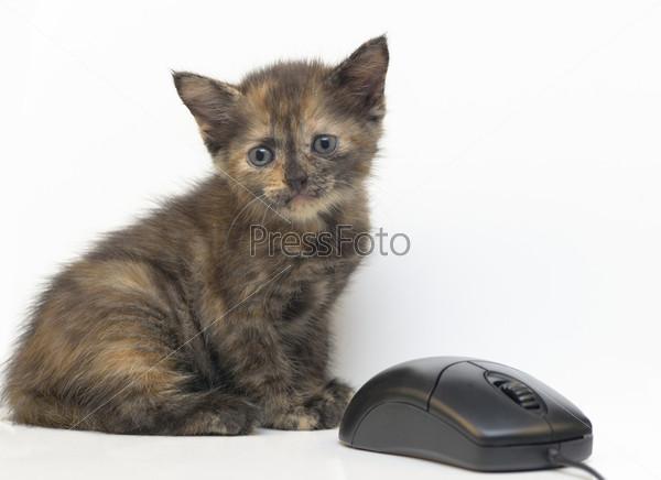 Фотография на тему Котенок и компьютерная мышь