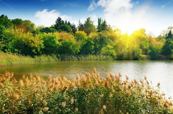 Лесное озеро в лучах рассвета