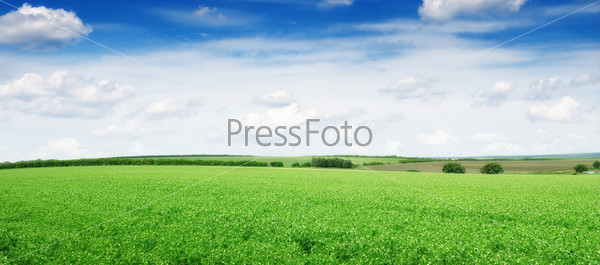 Фотография на тему Луг и голубое небо